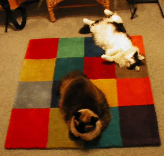 kitties on rug